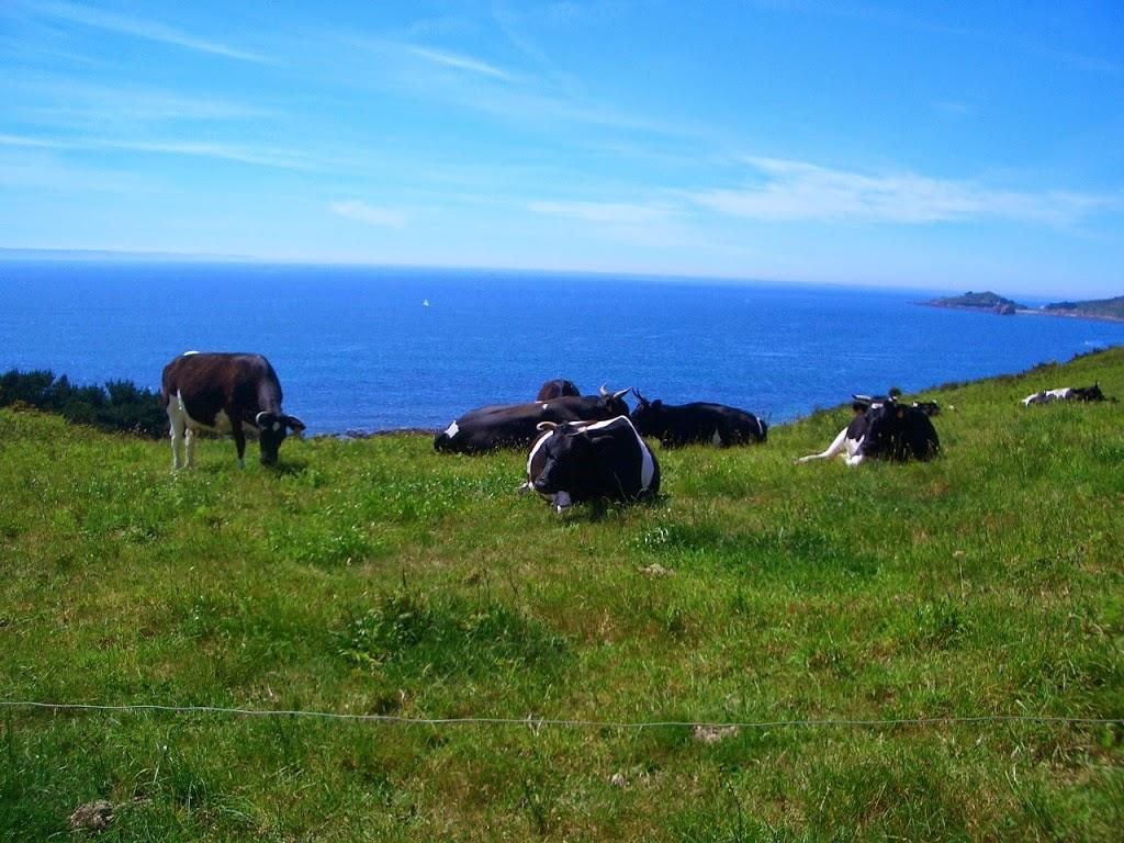 Pension 5* pour ces vaches !