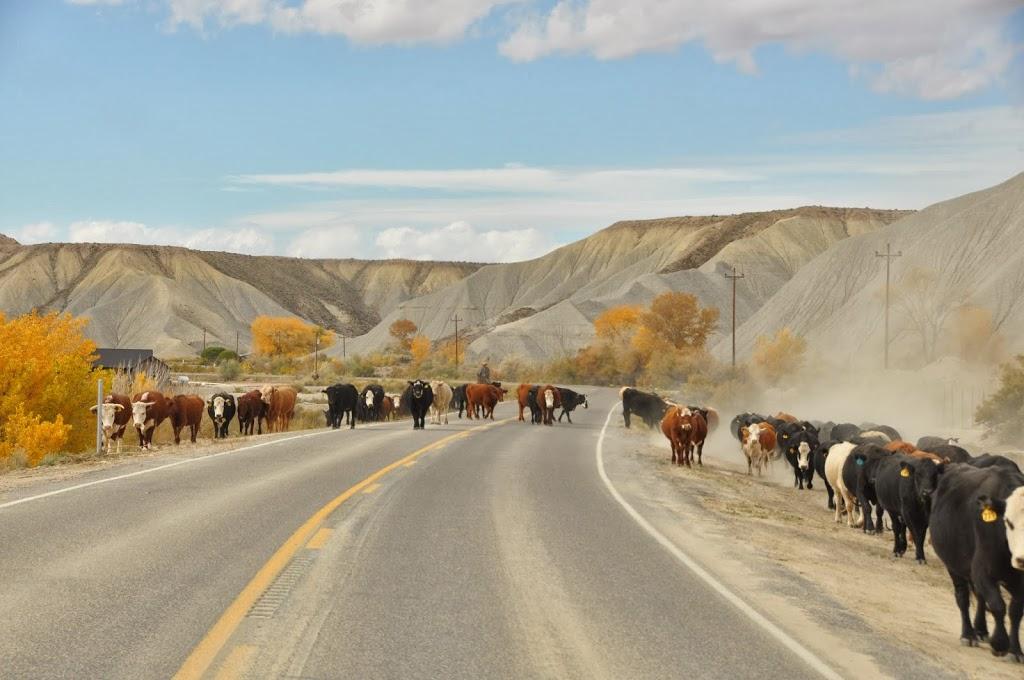Paysage de terre retournée et cow-boy au loin (si si !)