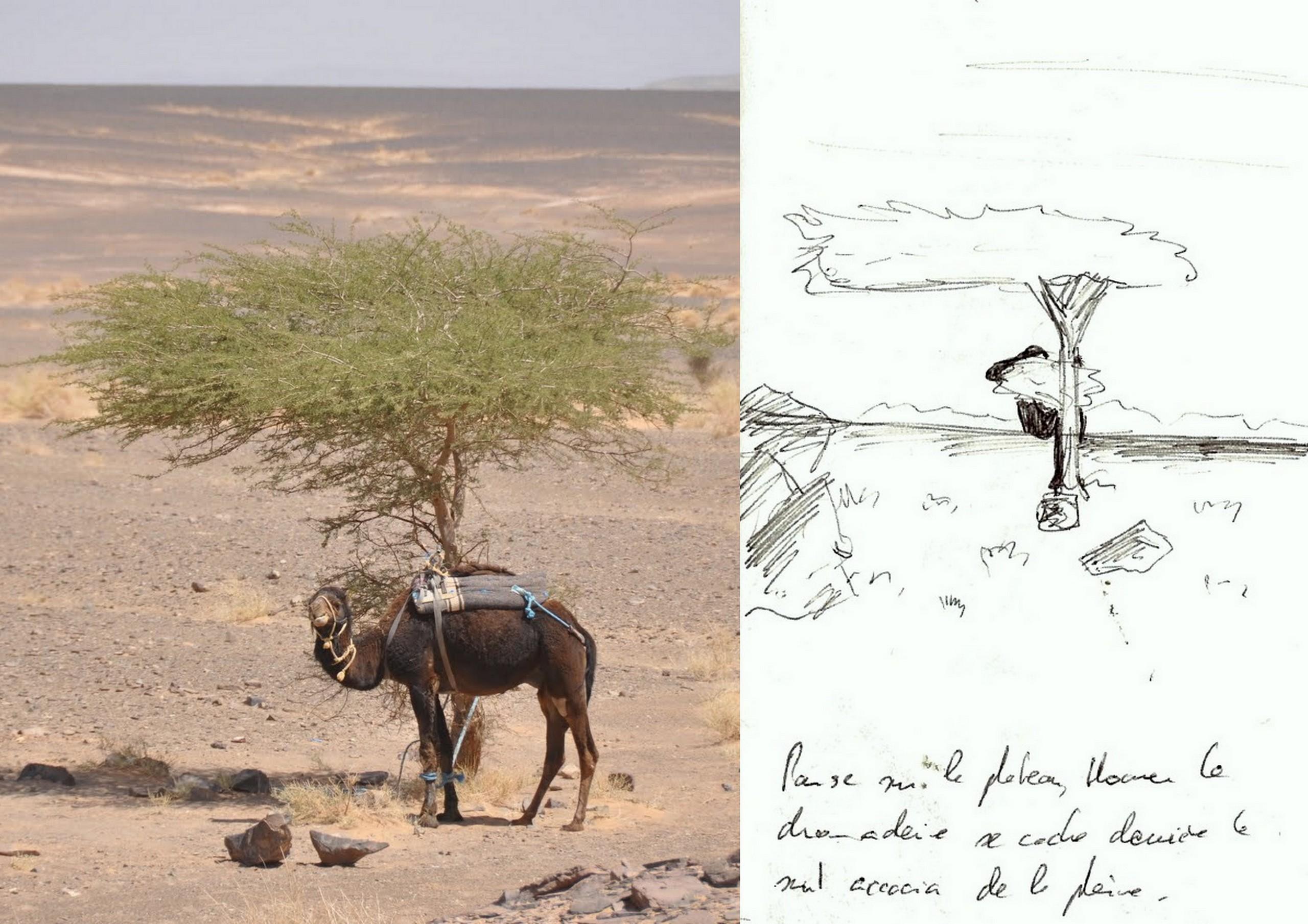 Maroc - Dunes de Merzouga - Avril 2012