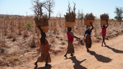 Mali - Novembre 2008_ 0124
